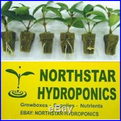 50 2 INCH NET CUP POTS HYDROPONIC GARDEN SYSTEM GROW KIT super fast shipping